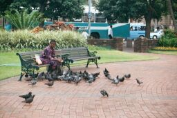 Feeding birds at Medwood Gardens