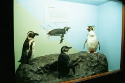 Stuffed Penguins in City Hall Museum